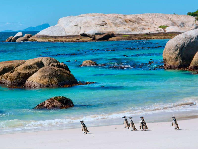 cabo verde pinguinos febrero